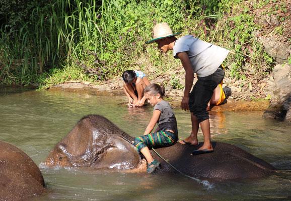 Tierkunde: Elefantenbad, Thailand