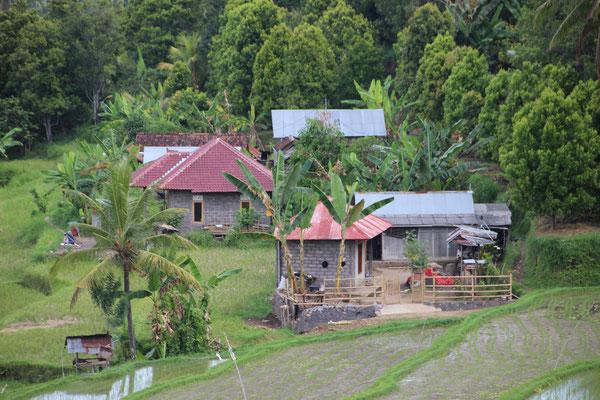 Reisfelder in der Bergregion nach Munduk