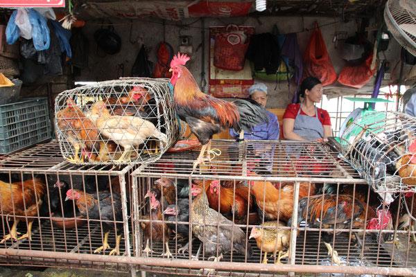 Hühnerverkauf in Massen, Ninh Binh