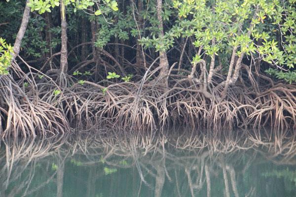 Mangrovenwälder, Koh Kood