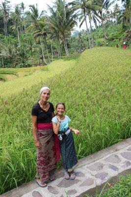 Spaziergang auf den Reisfeldern