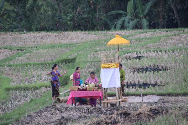 Kleine Zeremonie im Reisfeld