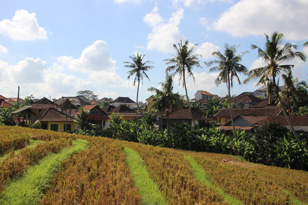 Reisfeld, North Kuta