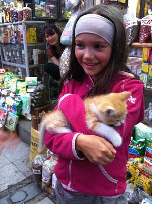 Katzenglück mitten in Hanoi