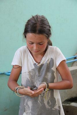 Tierkunde - eine junge Schildkröte im Schutzzentrum, Kambodscha
