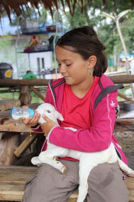 Ersatzmutter beim Füttern des kleinen Lamms, das ca. alle zwei Stunden nach Milch blökt