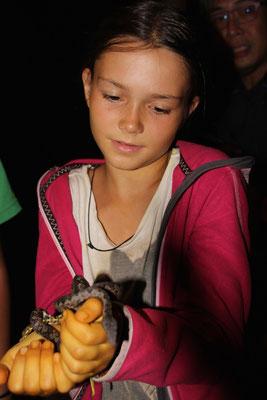 Tierkunde: Schlangen hautnah, Bali