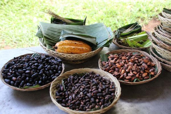 Kakaobohnen in den verschiedenen Verarbeitungsstadien, Bali