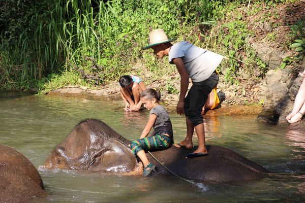 Nicht nur der Elefant ist nach dem Baden nass!