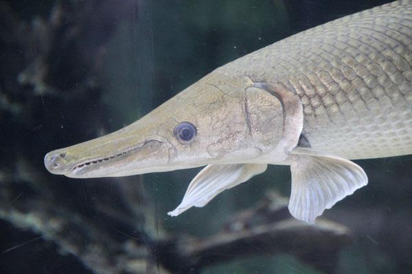 Faszinierende Unterwasserbewohner, River-Safari