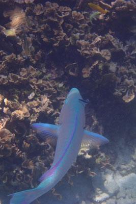 Faszinierende Unterwasserwelt, Koh Tao