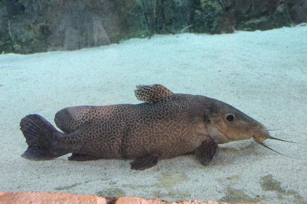 Vielfältige Unterwassertierwelt, River - Safari
