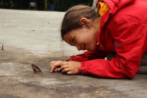 Tierkunde: Beobachten eines Schmetterlings, Vietnam