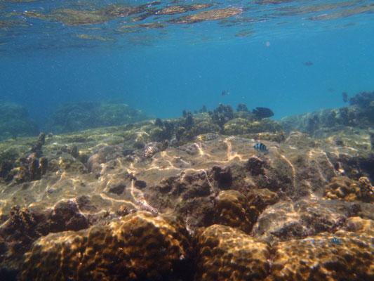 Faszinierende Unterwasserwelt auf Koh Nang Yuan