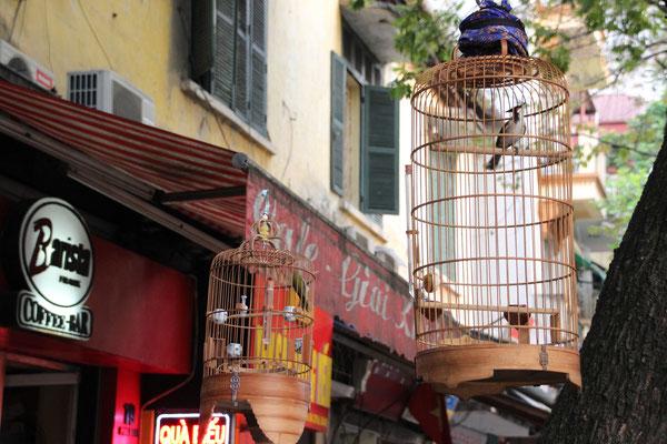 Vogelkäfige sind überall anzutreffen, Hanoi