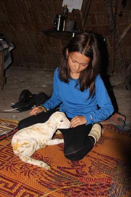 Frisch geborenes Lamm auf der Tierfarm in Suanphung