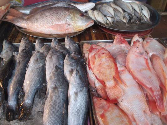 Frische Fische am Markt von Koh Lanta