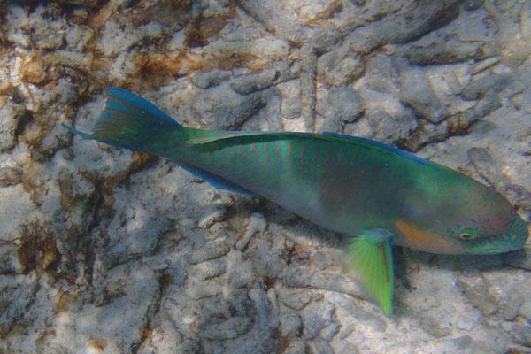 Farbenpracht unter Wasser, Koh Nang Yuan