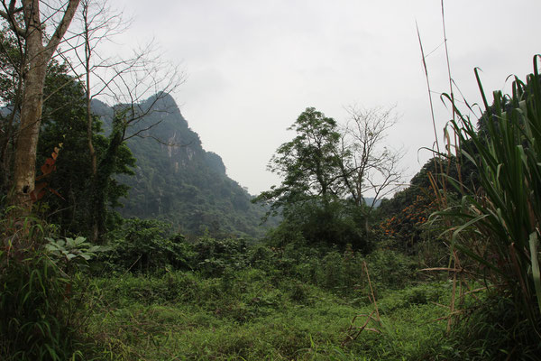 Cuc Phuong Nationalpark