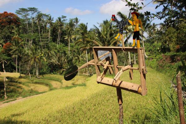 Geräuschvolle Windräder sind überall auf den Reisfeldern anzutreffen