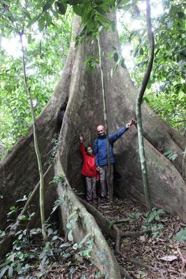 1000- jährige Baumriesen im Cuc Phuong NP