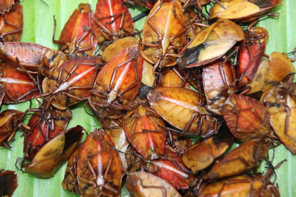 leckere Käfer