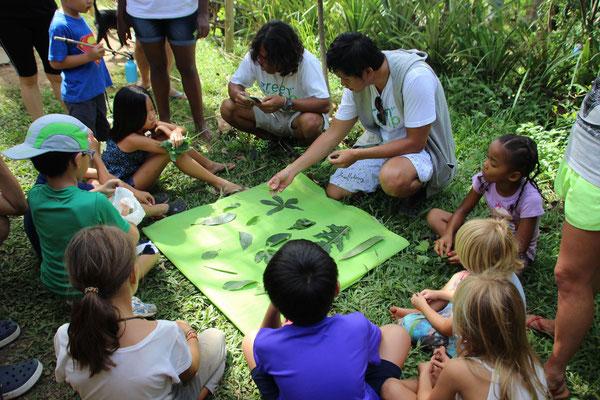 Naturkunde, was sind das alles für Blätter?, Bali