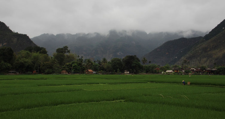 Reisfelder in Mai Chàu