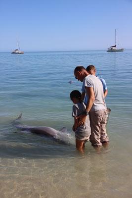 Tierkunde, Delphin ganz nah, Australien