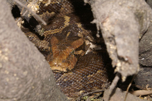 Python moulure