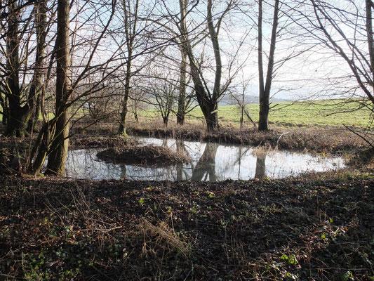 erweiterter Flachwasserzone in der Marbach Lauter