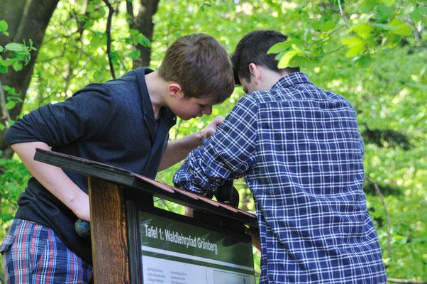 Montage der Informationstafeln des Waldlehrpfads durch Schüler der TKS