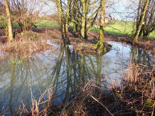 Flachwasserzone in der Marbach Lauter