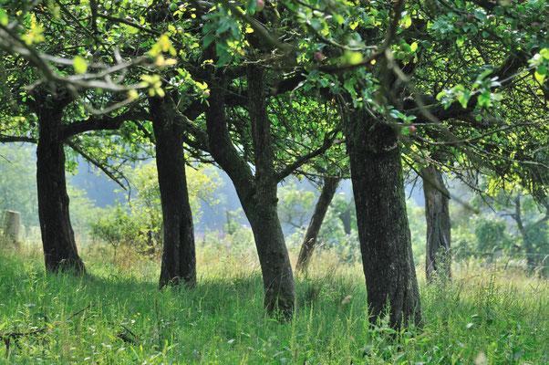 Blick in den alten Baumbestand