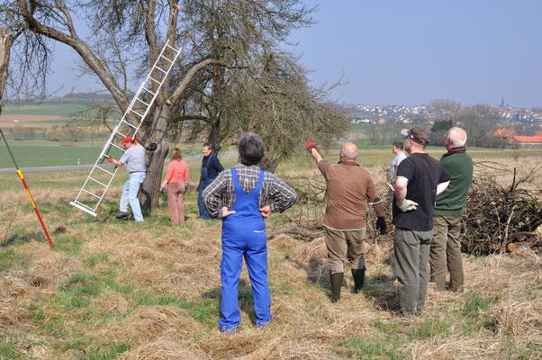 Pflege der Streuobstwiese durch den Obst-und Gartenbauverein Lumda