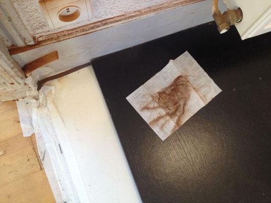 Spores de la mérule