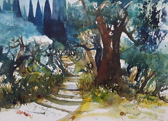 Olivengarten Toskana 2018 Aquarell 36 x 48 cm