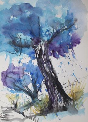 Olivenbäume Aquarell 24 x 32 cm
