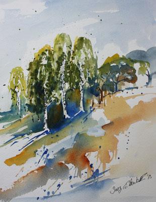Birken Aquarell 24 x 32 cm