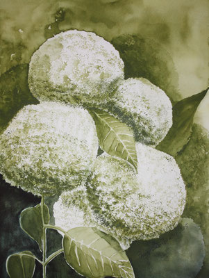 Hortensien Aquarell 30 x 40 cm
