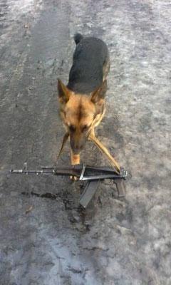 Сепары в ШОКЕ!  На службу в  ВСУ поступили хвостатые оруженосцы, для разгрузки дозорных групп!