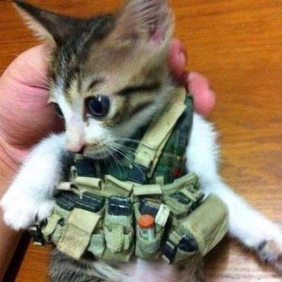 Курсант учебки боевых котов. Скоро сепарским крысам- котец!
