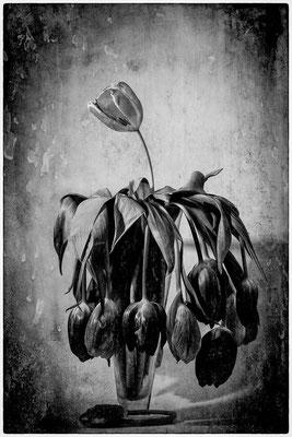 Les tulipes - Roseline Dupeux