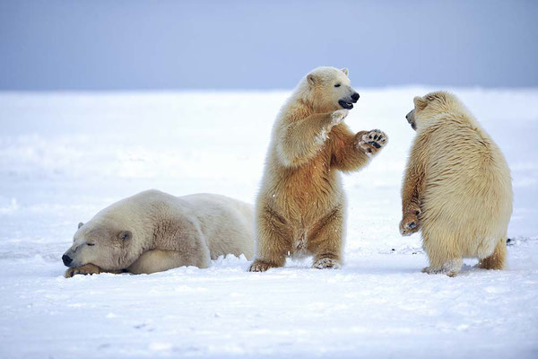Un ours de trop - Fabrice Simon