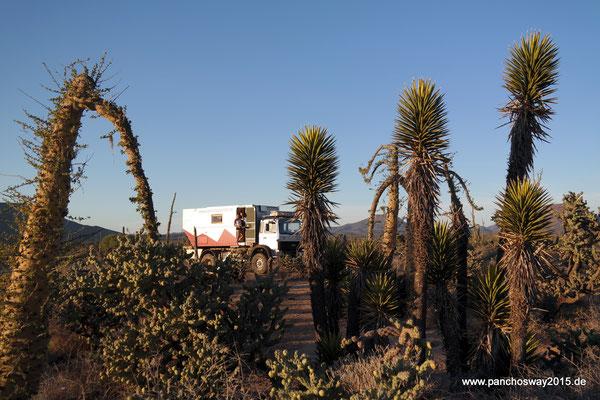 Mexiko_Baja California_5 km vor Rosarito nach 55 km Mörderstraße
