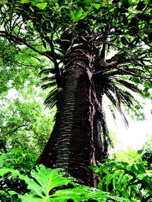 Elkington Park Tree