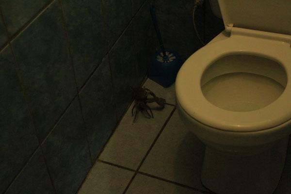 Pas petit le crabe!.