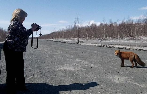 Снимаем лисичку