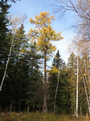 Пойменый лес