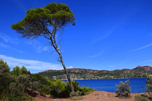 Küstenwanderpfad Cap du Dramont an der Cote D Azur